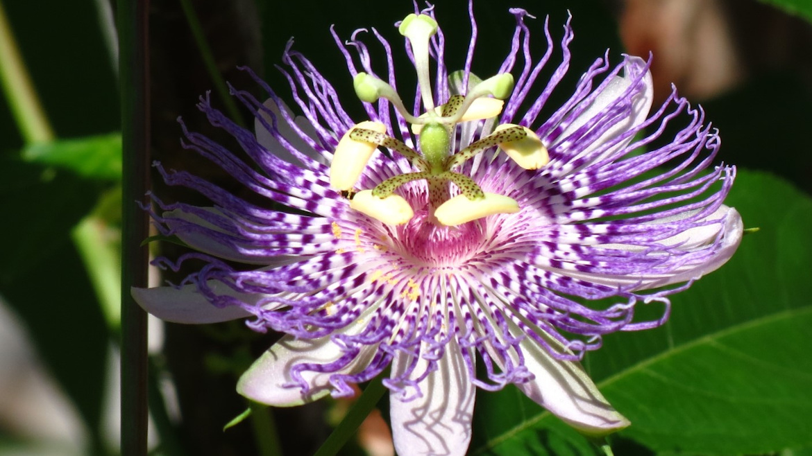 Keep Calm – Con La Passiflora!